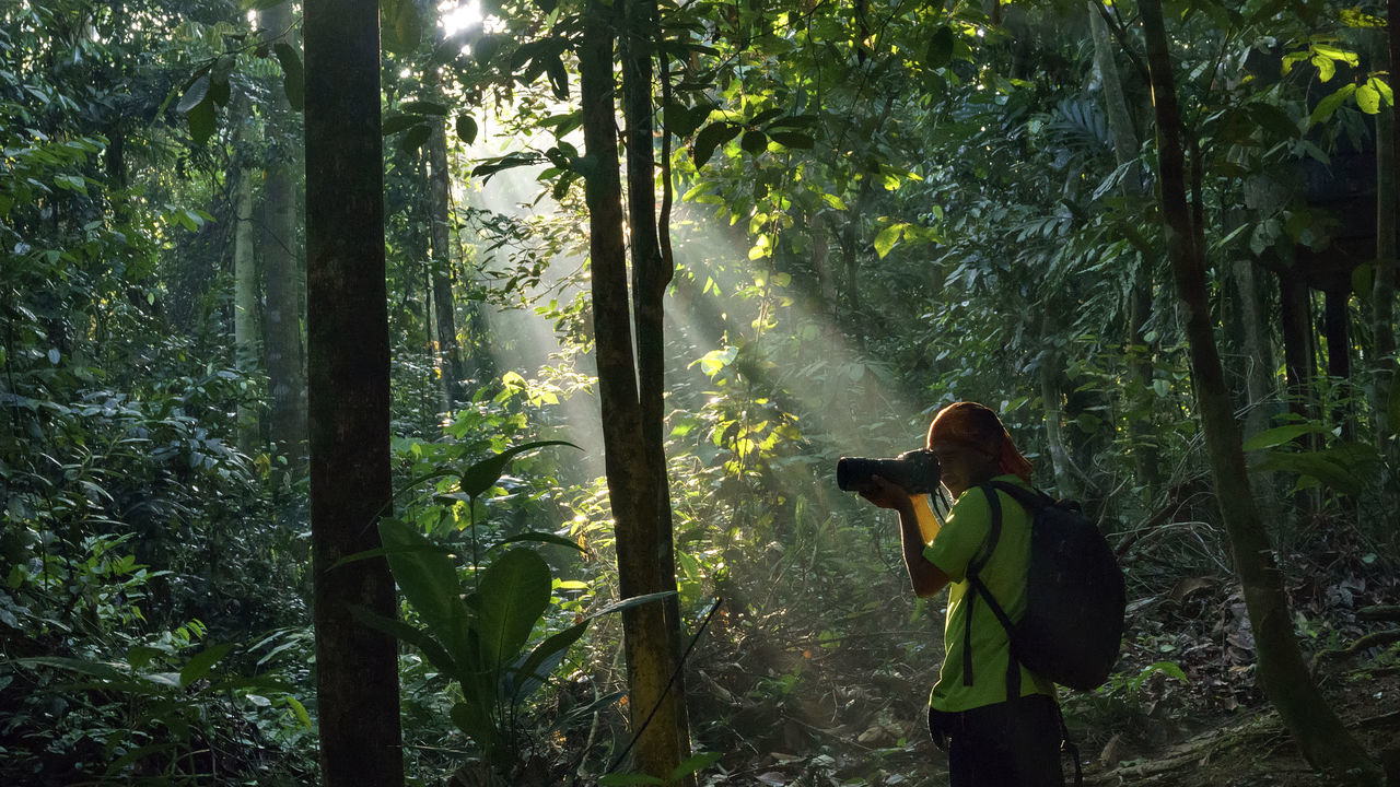 Tree Forest Green Color Outdoors Nature One Person People Tree Area Adult Travel Destinations Tall - High Malaysia Truly Asia Beauty In Nature Power In Nature Phoyography Time Rainforest Portrait Johornationalparksselai Nacture_photography Rays Of Light