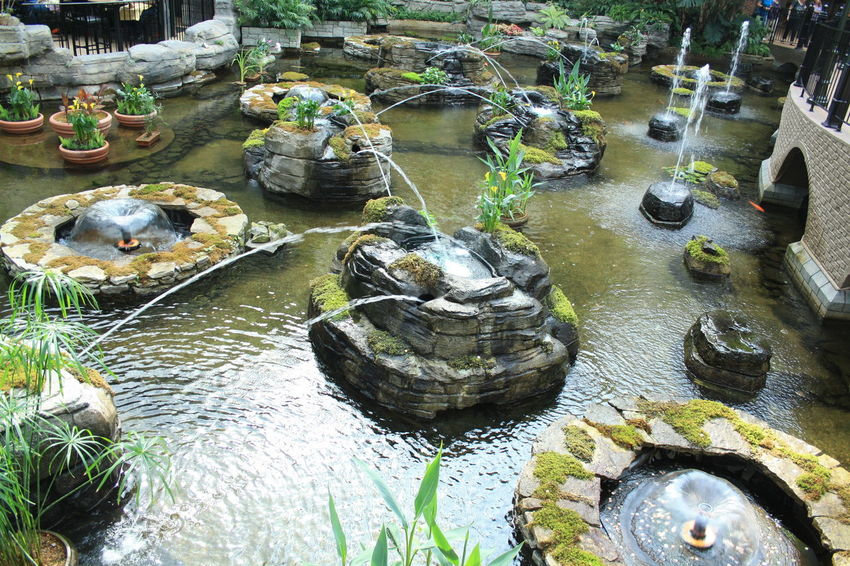 Day High Angle View Nature No People Outdoors Reptile Swimming Tortoise Tortoise Shell Water