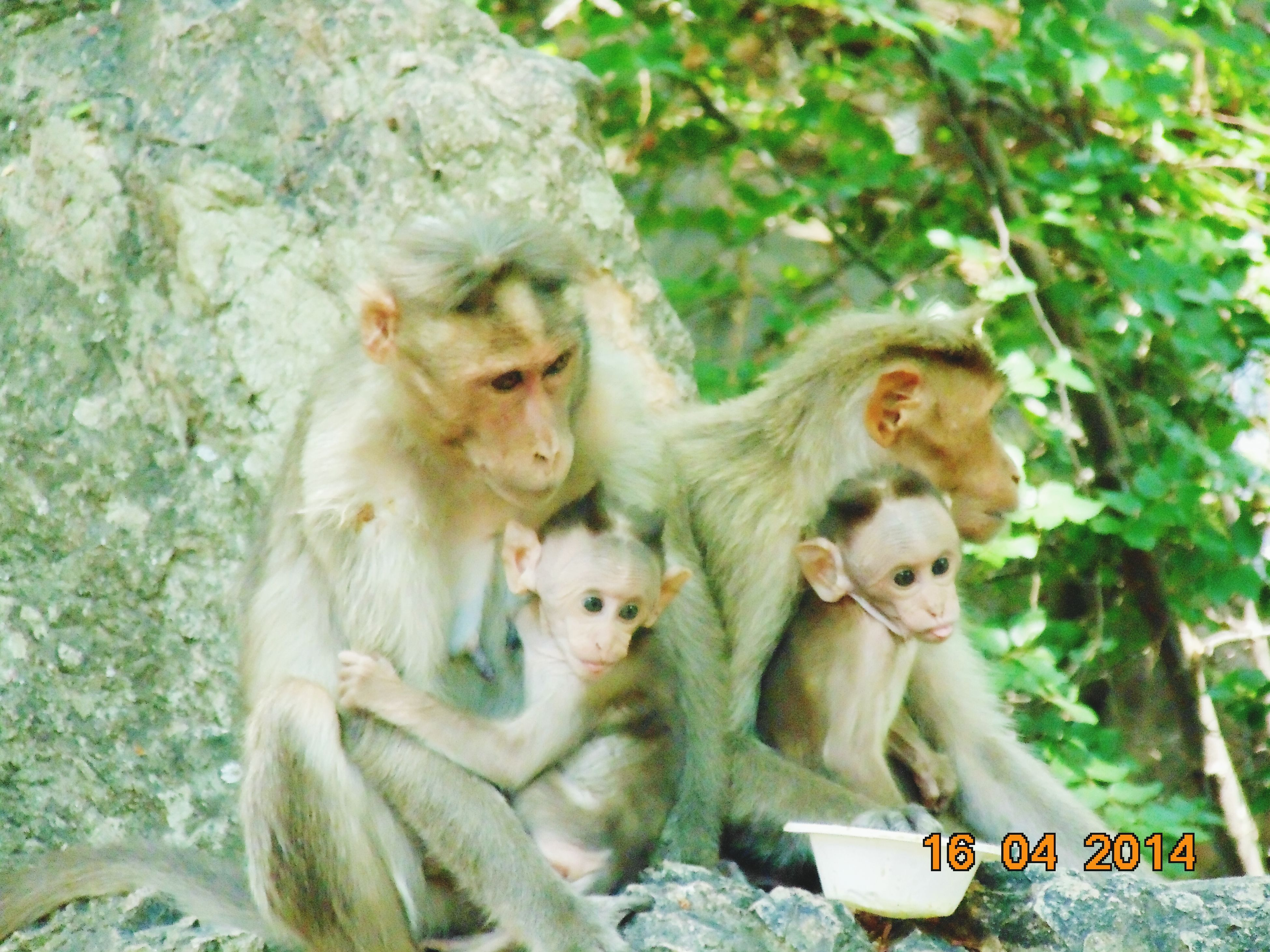 animal themes, monkey, tree, wildlife, animals in the wild, togetherness, mammal, nature, two animals, day, animal family, outdoors, young animal, sitting, growth, rock - object, forest, no people, full length, branch