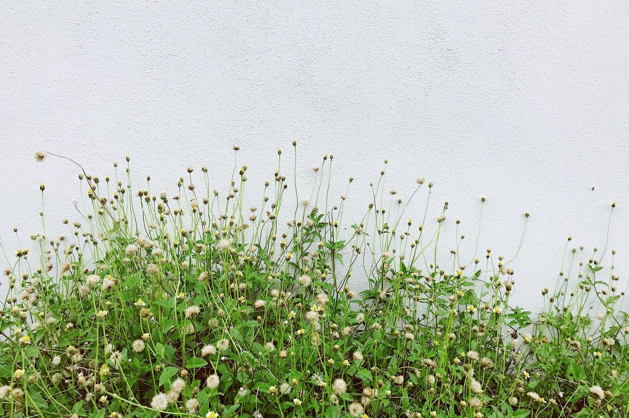 Grass Nature Outdoors No People Day Growth Plant Animal Wildlife Beauty In Nature Animals In The Wild Animal Themes Bird Flower Close-up Mammal Freshness