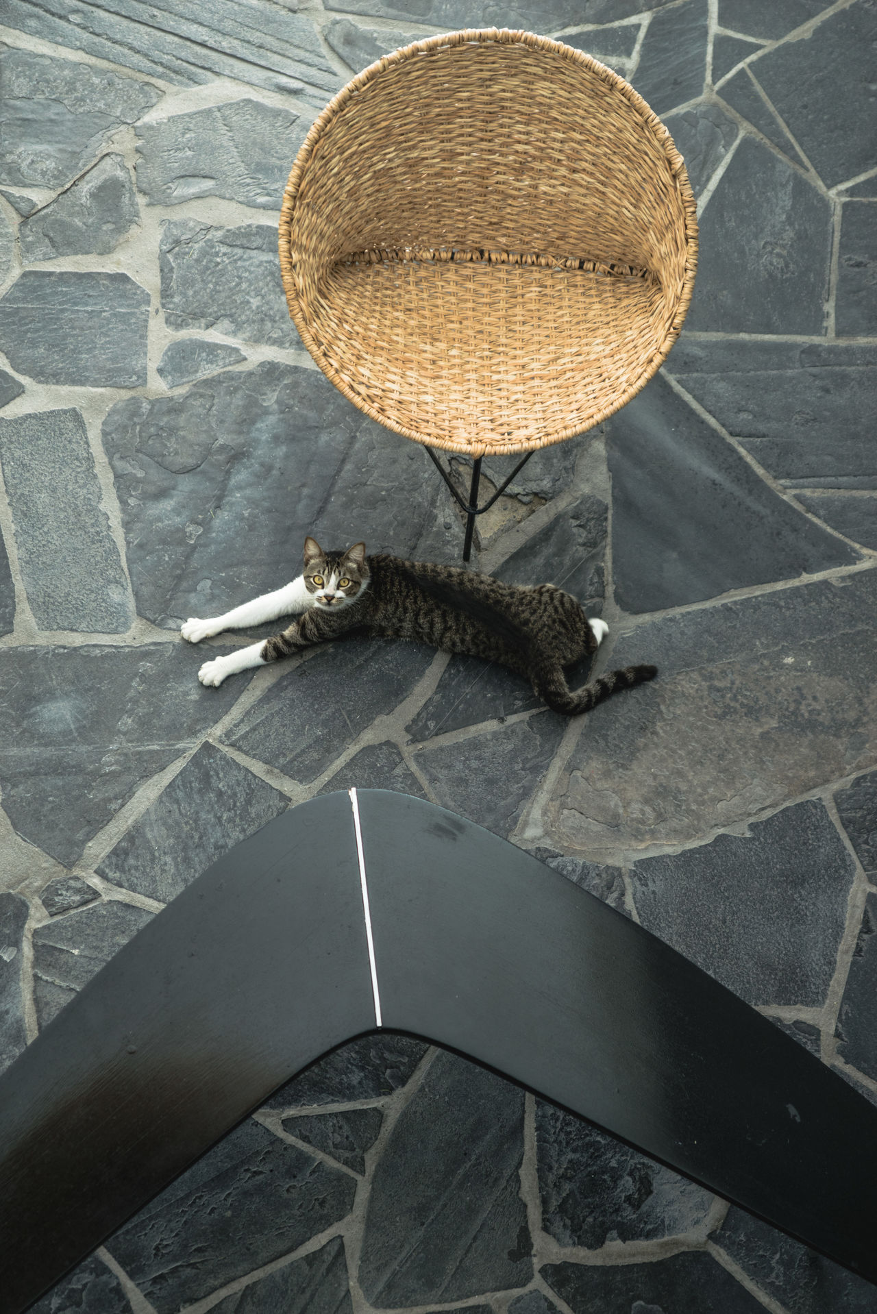 Acapulco Animal Themes Cats Chairs Close-up Composition Day Design Designer  Forniture High Angle View High End Hotels Interior Design Mexico Nature No People Outdoors Top Shot Travel Travel Photography