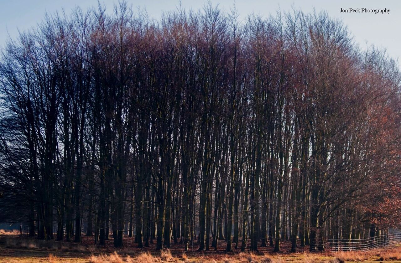 tree, nature, forest, outdoors, no people, bare tree, growth, day, beauty in nature, sky
