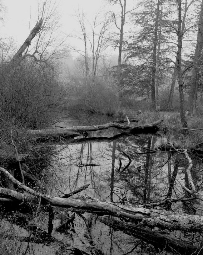 Foggy Wilderness Reflections Wilderness In The Forest Forest Blackandwhite Black & White Black And White EyeEm Best Shots EyeEm Nature Lover Nature Water Reflections