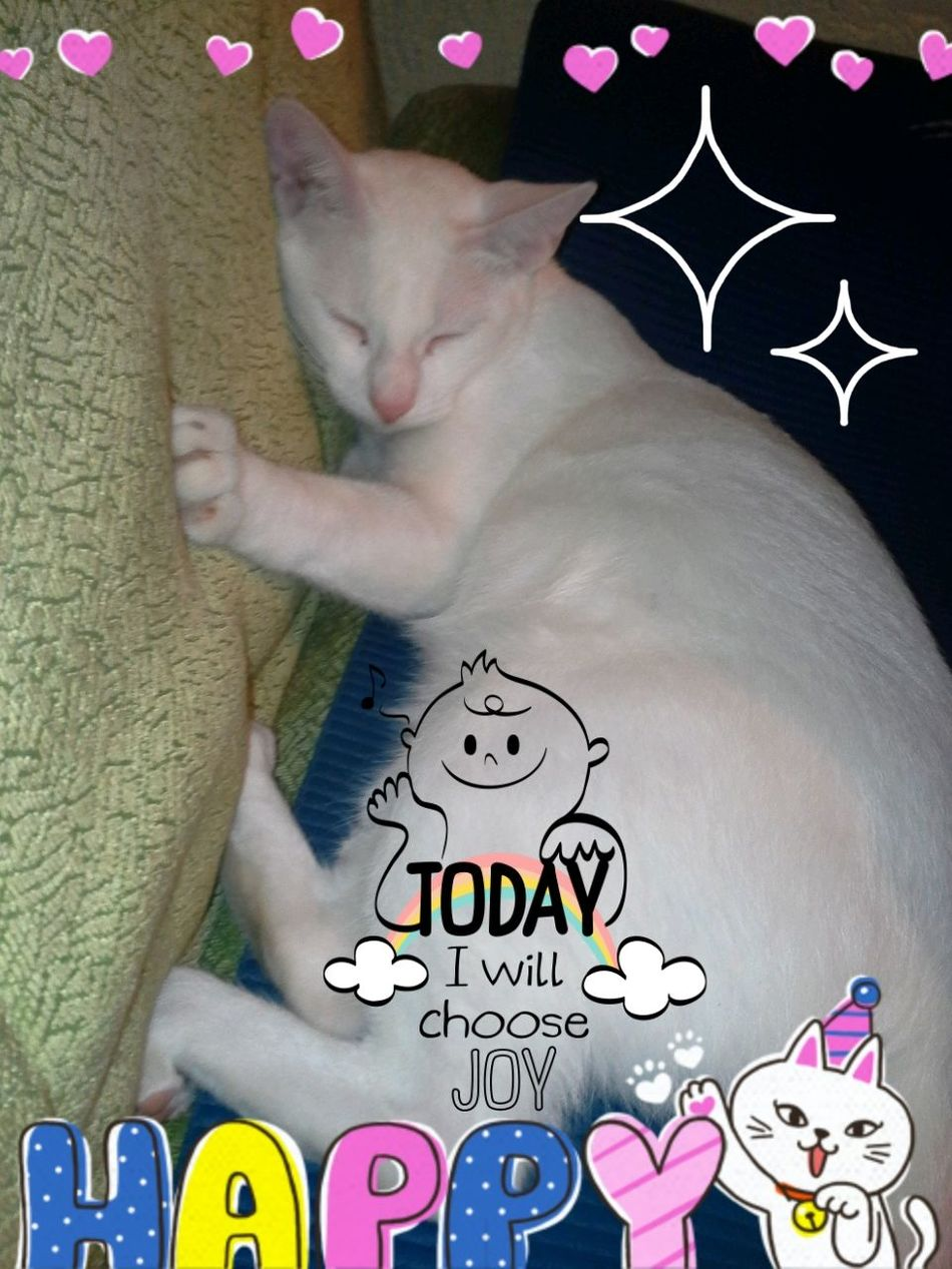 Cat♡ Beautiful ♥ Lovely My🐕 Heart😆❤