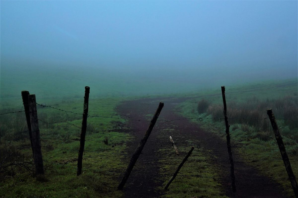 Barbed Wired Wednesday (when there´s no other way to go) Barbed Wire Beauty In Nature Day Fencepost Fences & Beyond Fog Landscape Mountain Nature No People Outdoors Scenics Sky Trailblazers_rurex Tranquil Scene Tranquility Tree