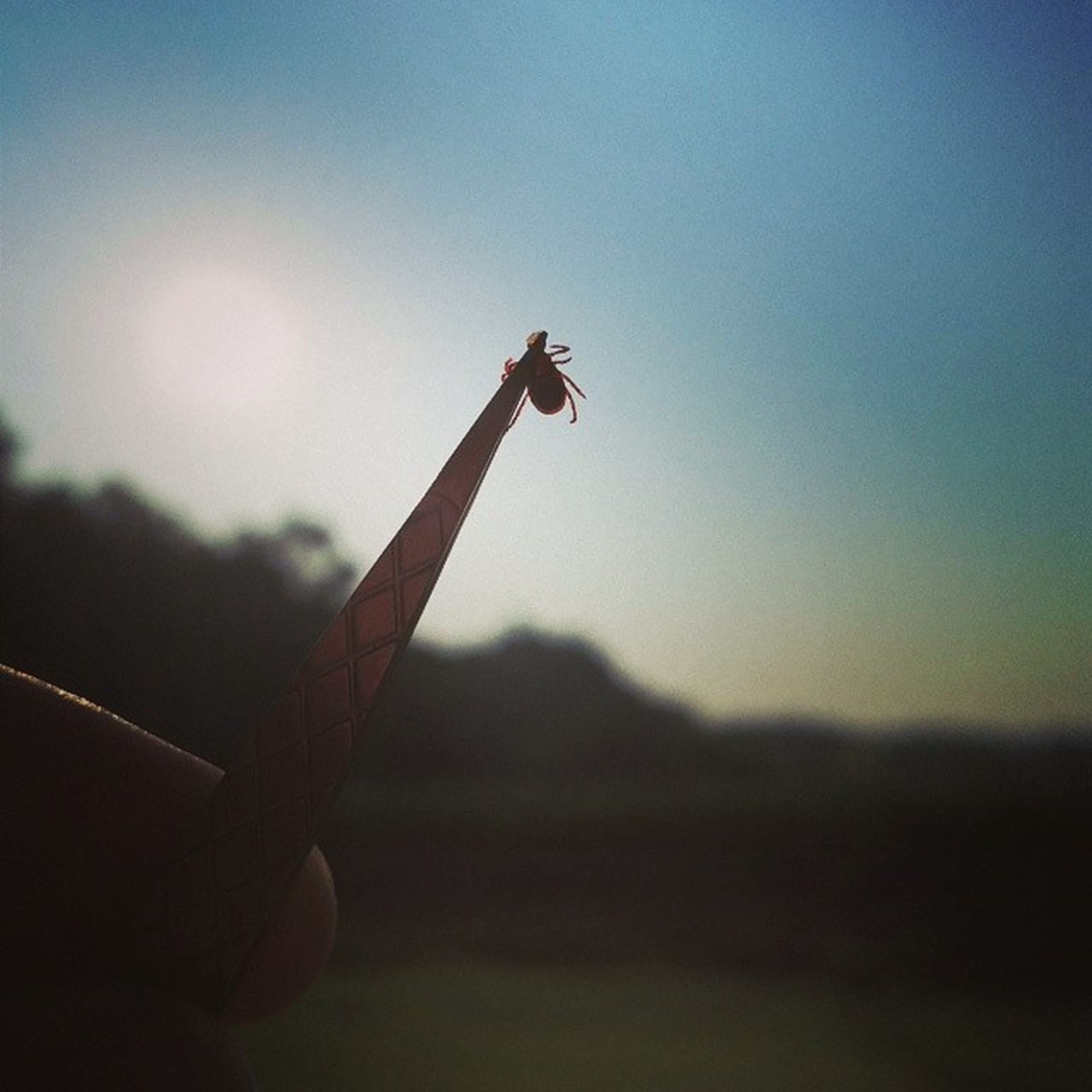 low angle view, silhouette, sky, focus on foreground, one person, part of, person, cropped, close-up, copy space, clear sky, holding, nature, dusk, outdoors, sunset, day, human finger, flying, selective focus