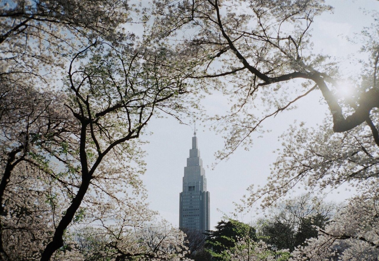 Outdoors Film Photography Filmcamera Film 35mm Film Filmisnotdead Tree