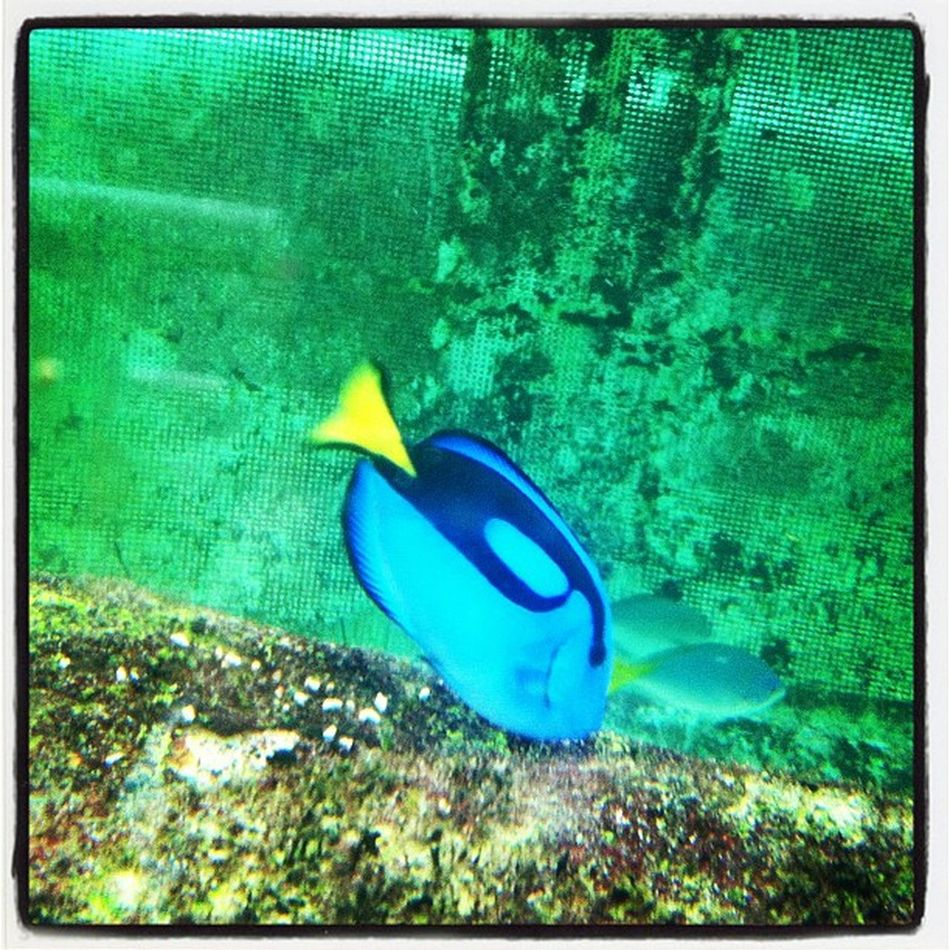 I'm in Sydney and yes I'm with Dory >< Findingnemo Syd Sydney Igsyd aquarium
