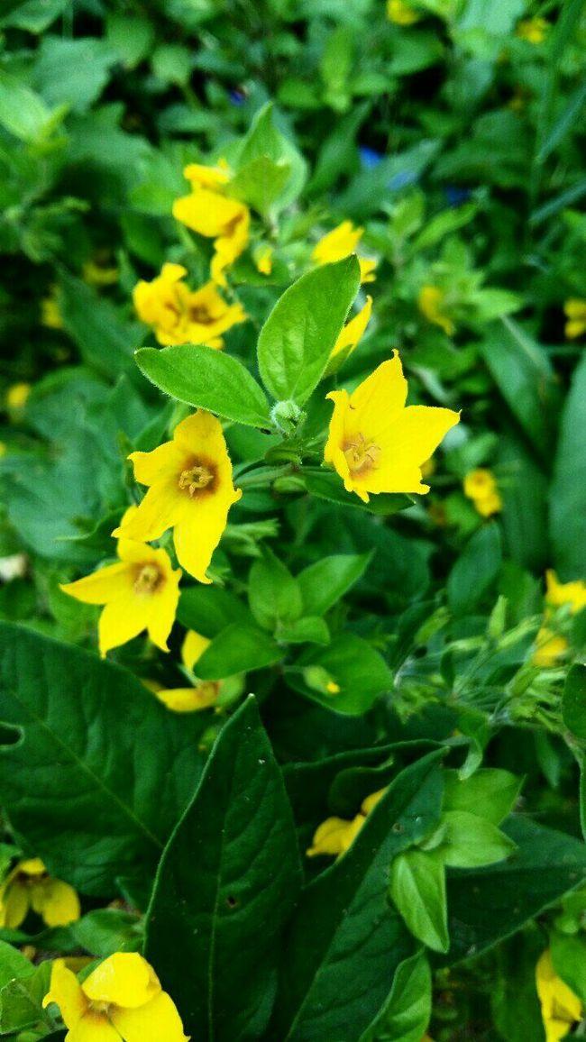 Flowers Flower Followme Following Please Follow4follow Summer лето Like Like4like Following желтый Followed