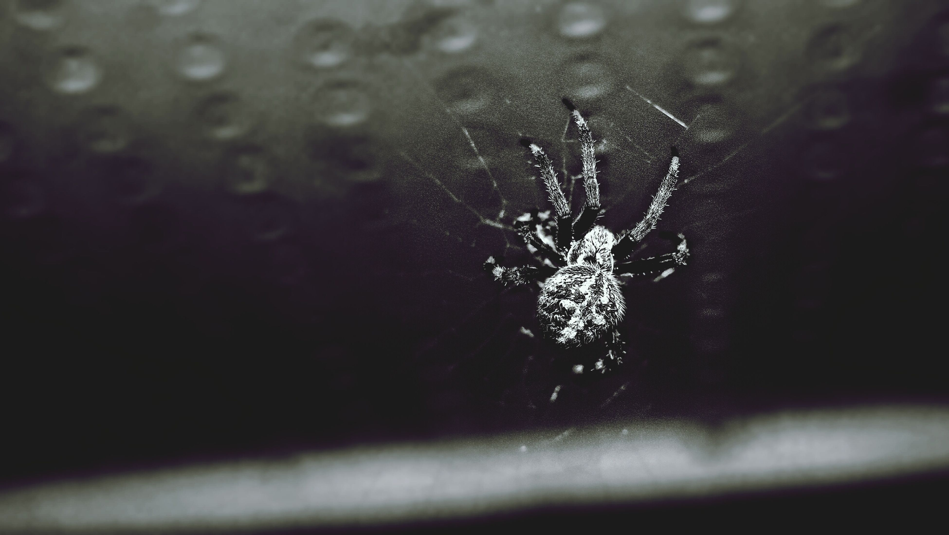 insect, one animal, animal themes, spider web, spider, animals in the wild, wildlife, close-up, focus on foreground, fragility, nature, selective focus, day, outdoors, drop, no people, arthropod, plant, beauty in nature