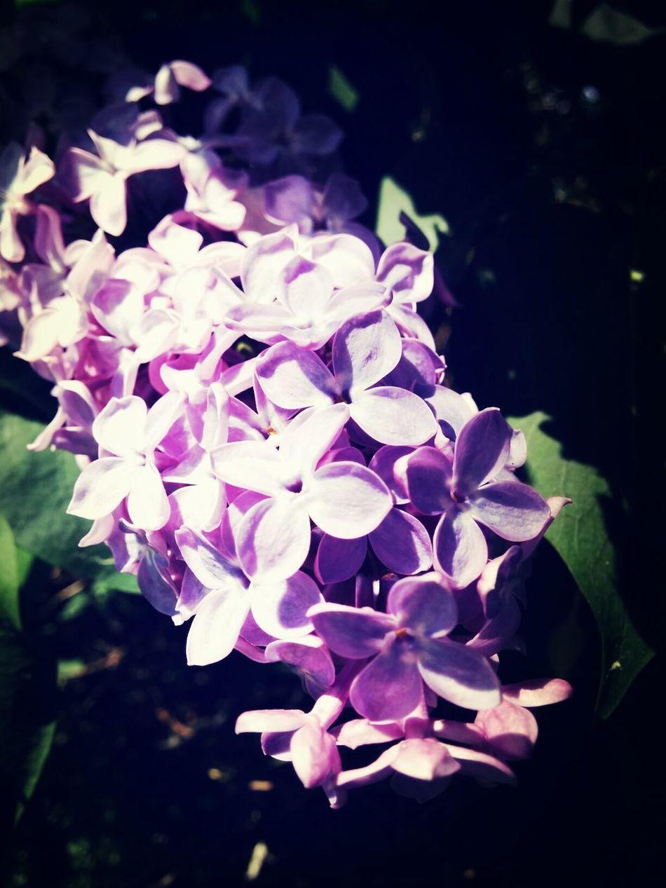 Flowers Nature Summer