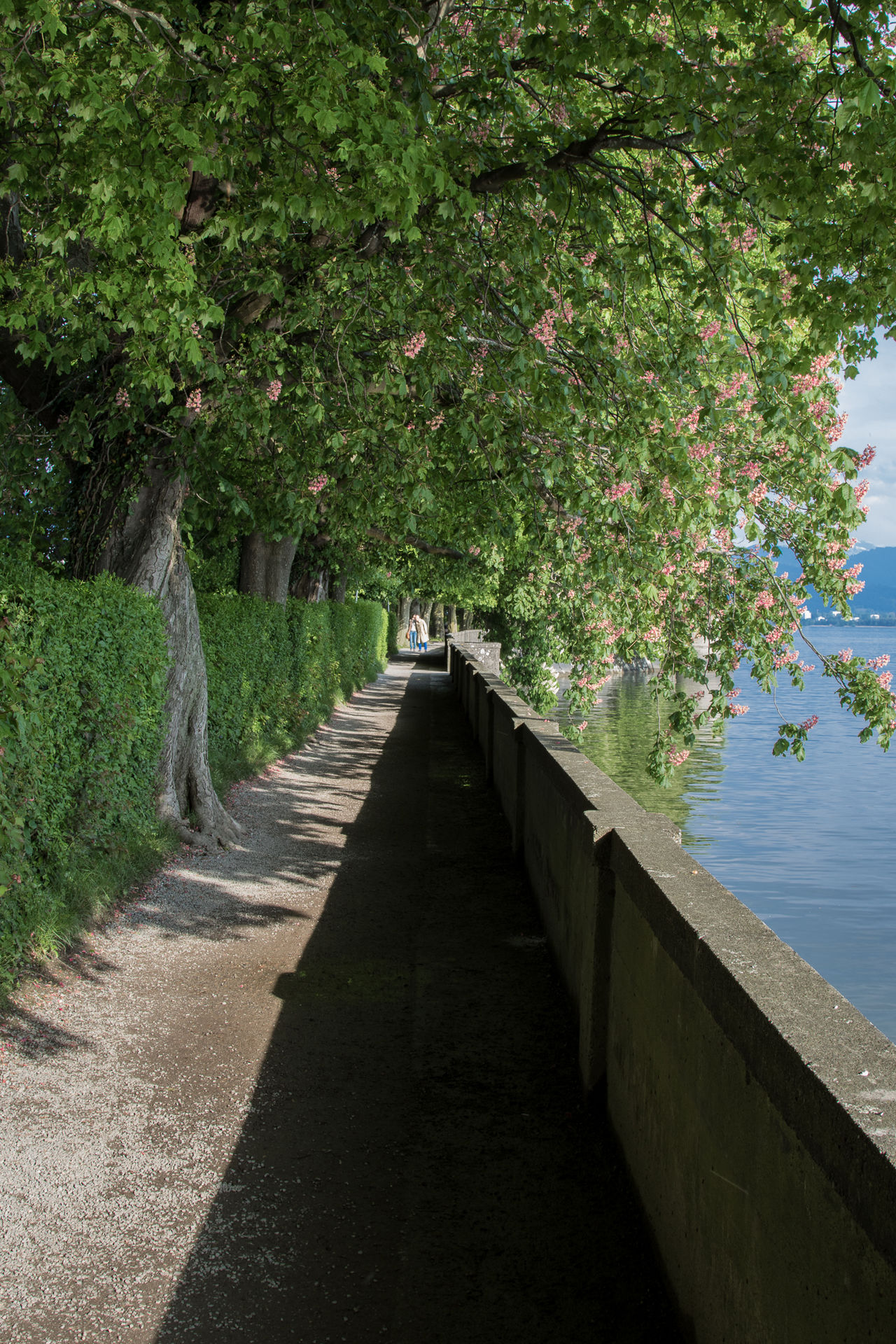 Beauty In Nature Blue Sky Bodensee Bodenseeregion Cloudy Day Idyllic Lindau Lindau Bodensee Lindau Insel Mountain View Mountains Nature No People Outdoors Sea Sea And Sky Seaside Sunlight Tranquility Water