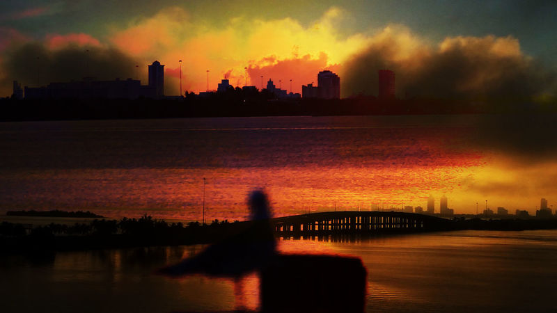 Double Exposure Silhouette Architecture Beauty In Nature City Cityscape Cloud - Sky Doubleexposure Nature No People Orange Color Outdoors Reflection Scenics Seagull Silhouette Sky Tranquility Two Layers Water Waterfront