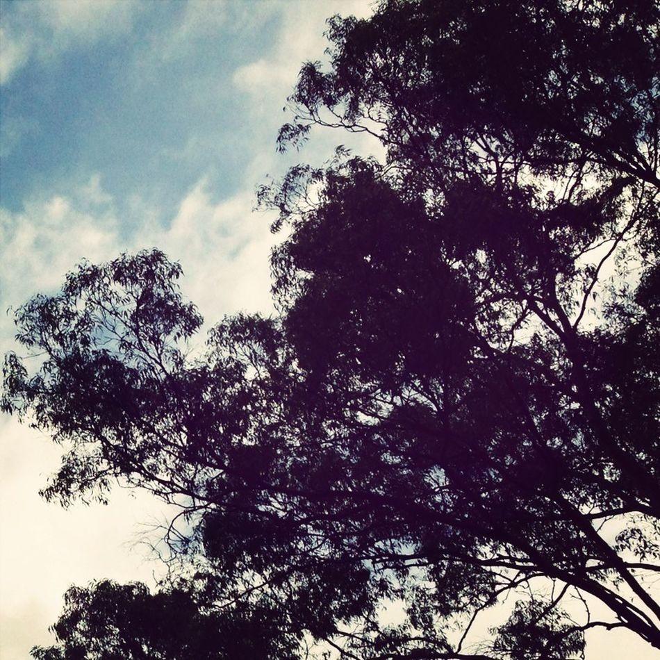 #trees #sky