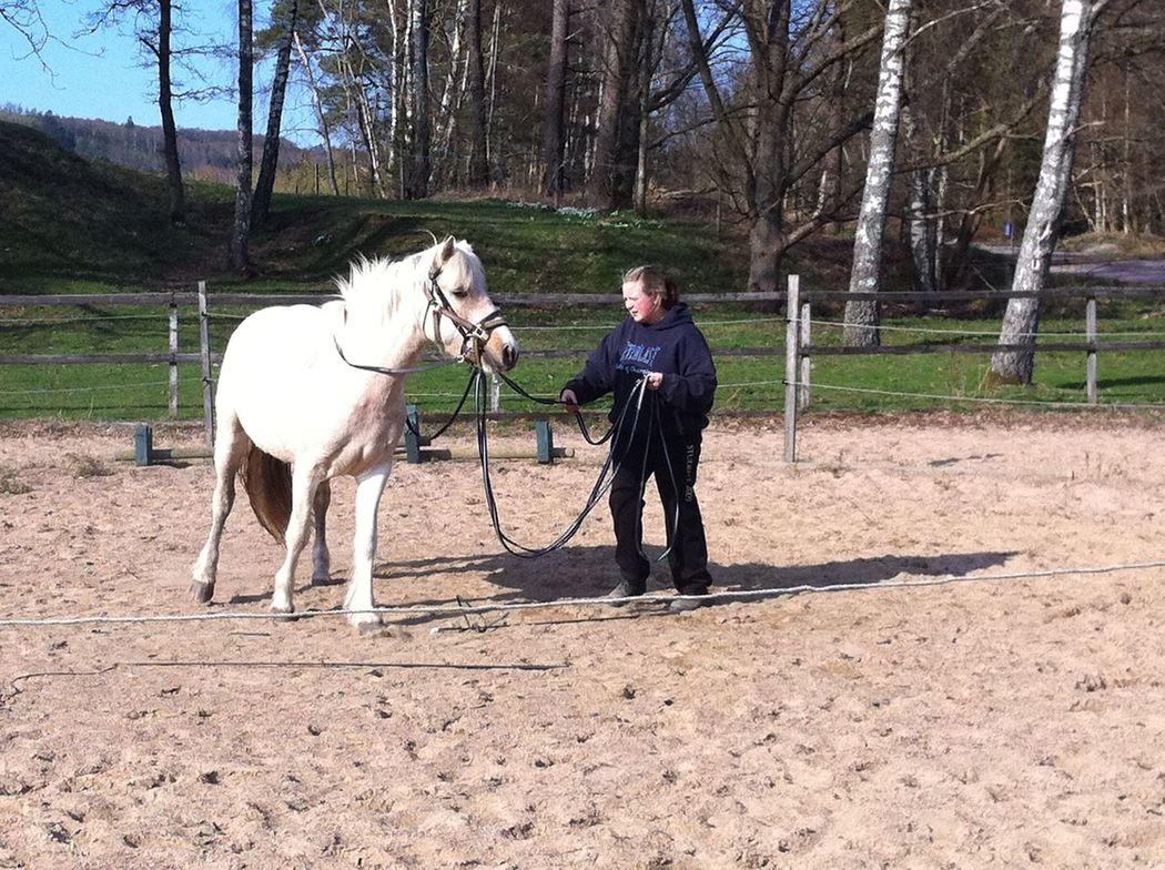 träning av unghäst sommarwm 2012