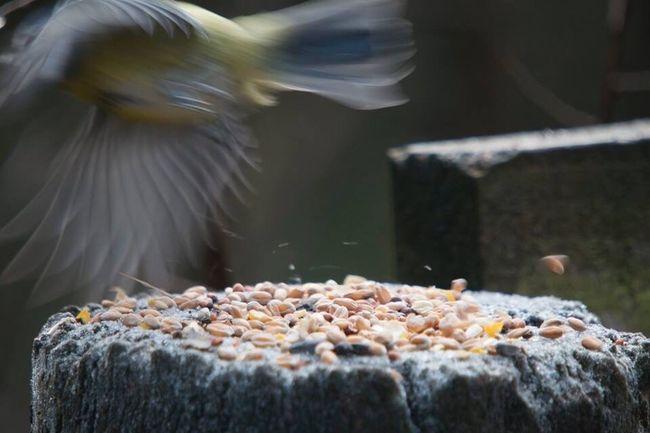 The Bird that Got Away The One That Got Away
