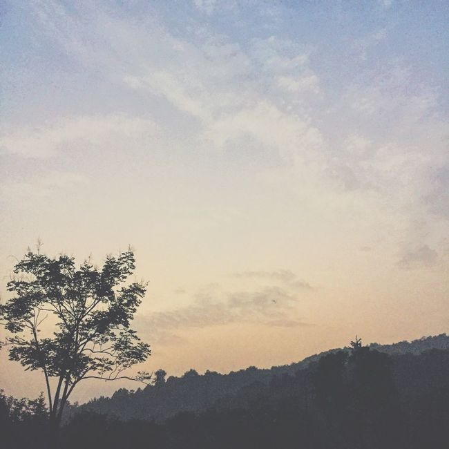 Tree Tranquil Scene Tranquility Scenics Silhouette Landscape Sky Beauty In Nature Sunset Nature Growth Cloud Mountain Outdoors Remote Solitude Majestic No People