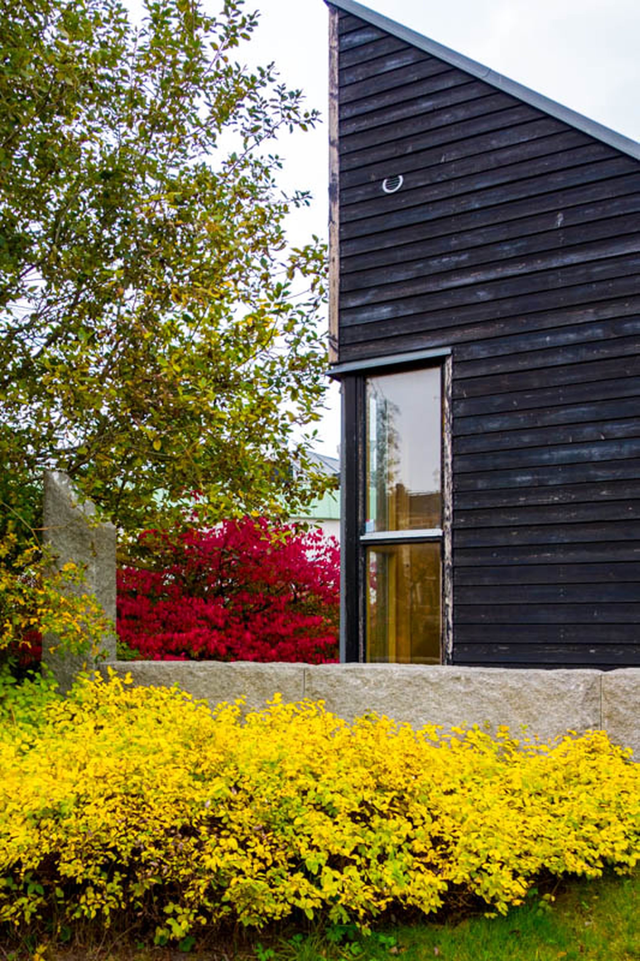 building exterior, architecture, built structure, window, yellow, tree, house, growth, flower, plant, residential structure, glass - material, day, nature, residential building, low angle view, outdoors, sky, season, no people