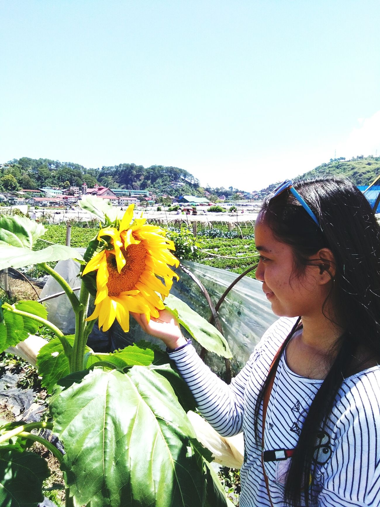 Flower Sunflower Sky Outdoors Nature Greenfield Sunny Summer Sunflower Teenager Green Strawberryfield Sunnyday Yellow