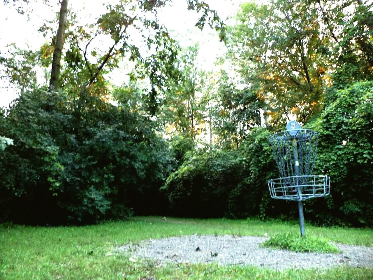Summertime discing Summertime Photographic Memory Disc Golf Michigan Disc Golf Beauty In Nature
