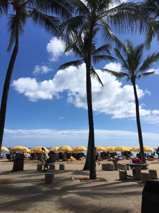 Beach Umbrellas Playing Tourist