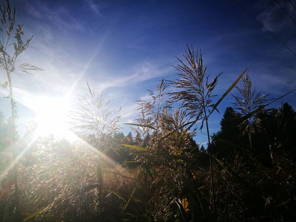 Nature Growth Sunlight Sky No People Outdoors Day Plant Low Angle View Beauty In Nature Tree Freshness