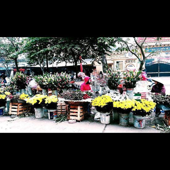 Tet Holiday Vietnam Flower