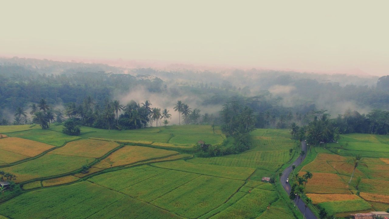 landscape, agriculture, field, tranquil scene, beauty in nature, tranquility, nature, rural scene, scenics, tree, farm, idyllic, patchwork landscape, cultivated land, growth, fog, no people, outdoors, aerial view, day, hazy, plowed field, grass, rice paddy, sky