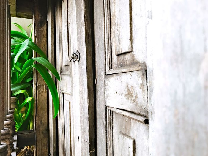 Inside Door Wood - Material Green Color Day No People House Architecture Wood Older  Decoration Rustic Real Home Rustic Window Desing Vintage Window Old Window Old Green Color Vintage Plant Leaf Leaf Inside Window Decor