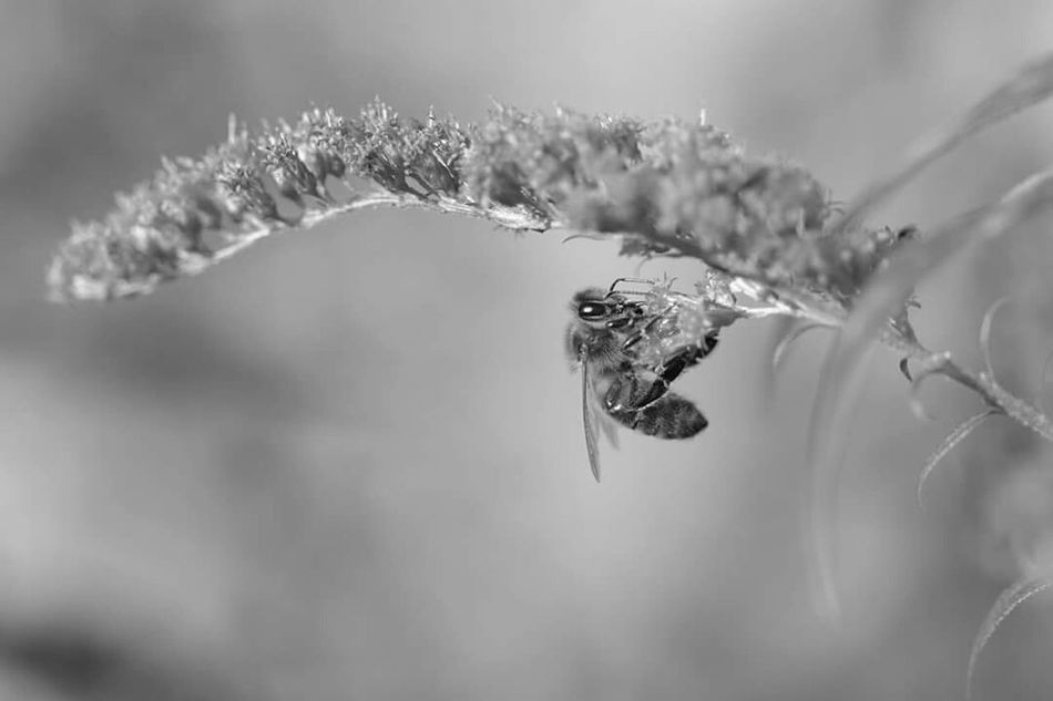 Busy, busy collecting Bw_collection Bw_lover Bws_worldwide Bnw_collection Bnw_captures Black And White Blackandwhite Sweden Swedish Nature