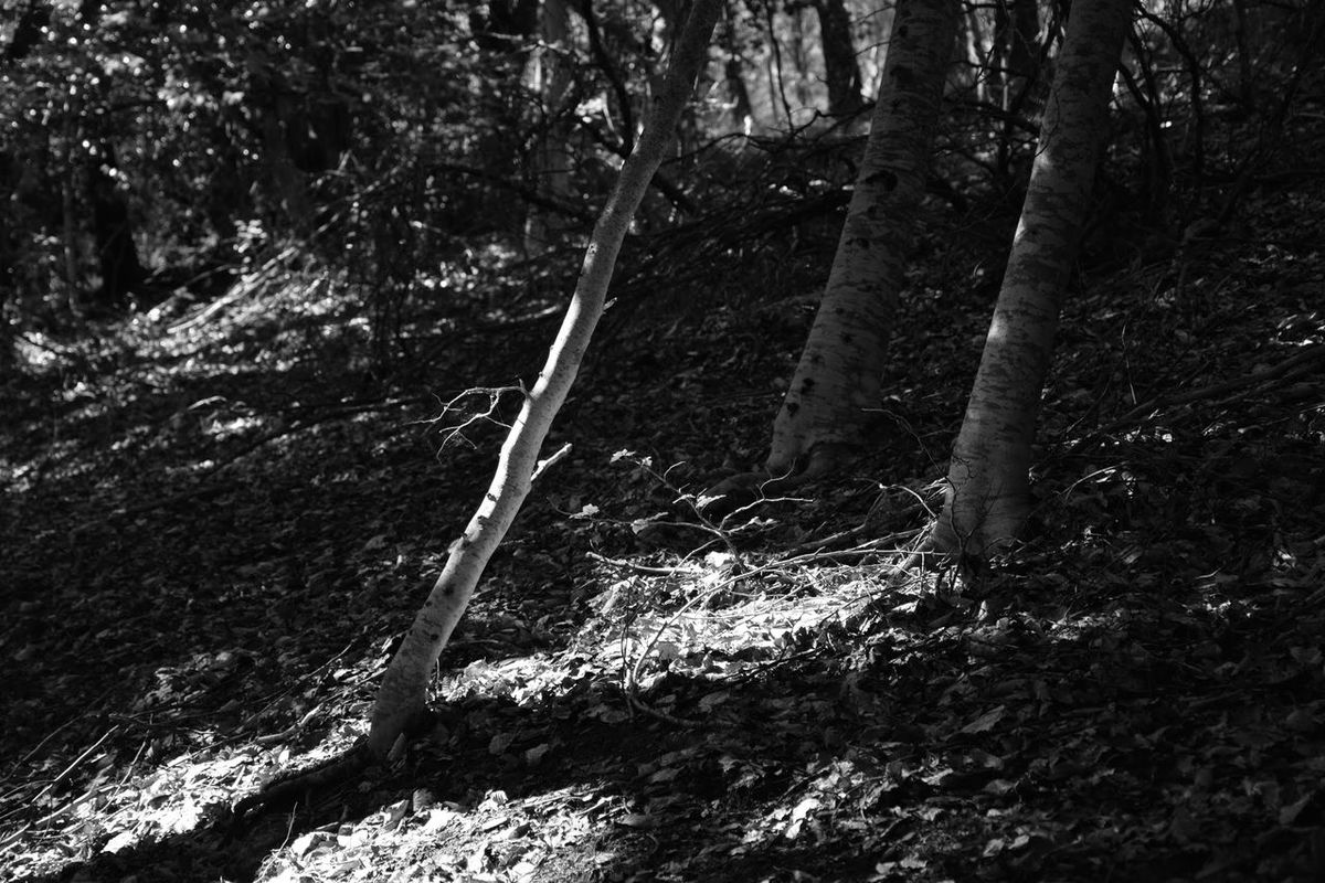 Hugging A Tree Black And White Light And Shadow Forest Of Lost Souls Autumn is coming. ☺