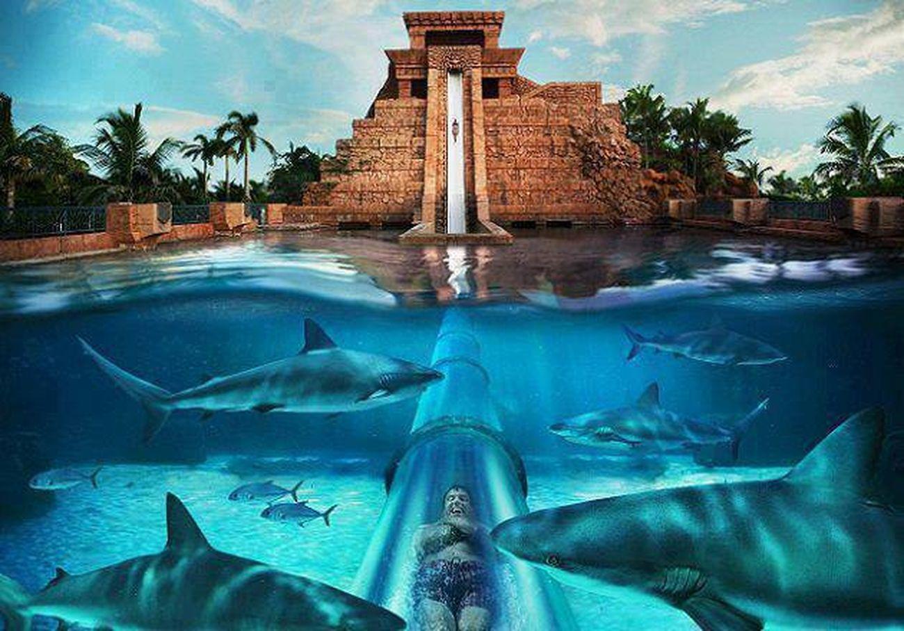 waterslide at Atlantis resort, would like to try?