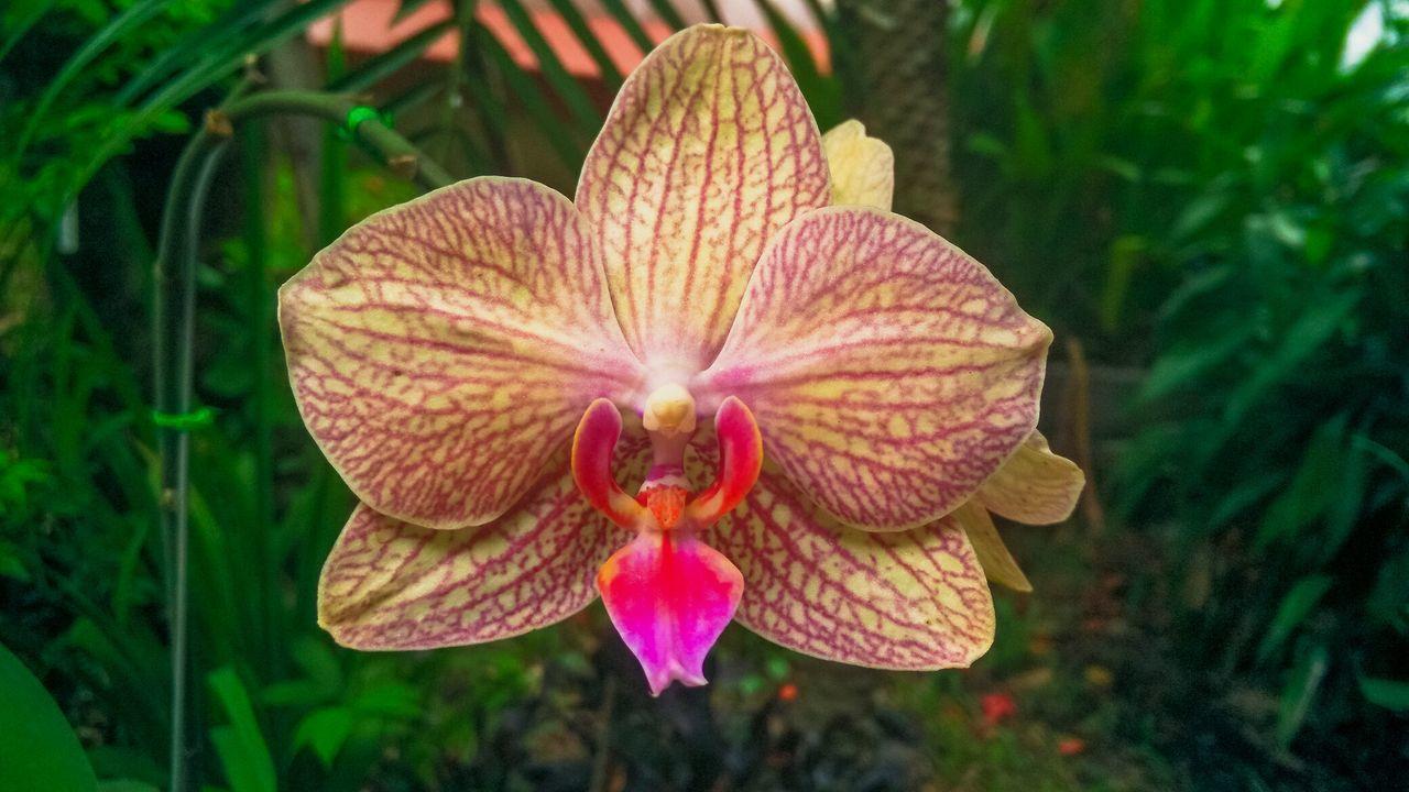 Flower Single Flower Beauty In Nature Flower Pattern Blossom Bouquet Cut Flowers Nature Flower Head Flowers