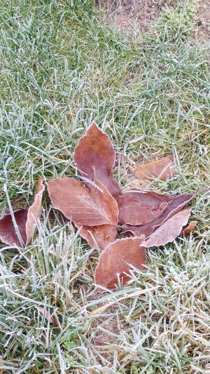 Freezing cold outside. Close-up Leaf Nature Growth No People Outdoors Grass Day Plant Fragility Beauty In Nature Backgrounds Tree Freezing Cold Nature Freezed Freezing ❄ Freezing Grass Freezing Leaves Togetherness Leaves🌿 Made By Noesie EyeEmNewHere The Week On EyeEm Shades Of Winter