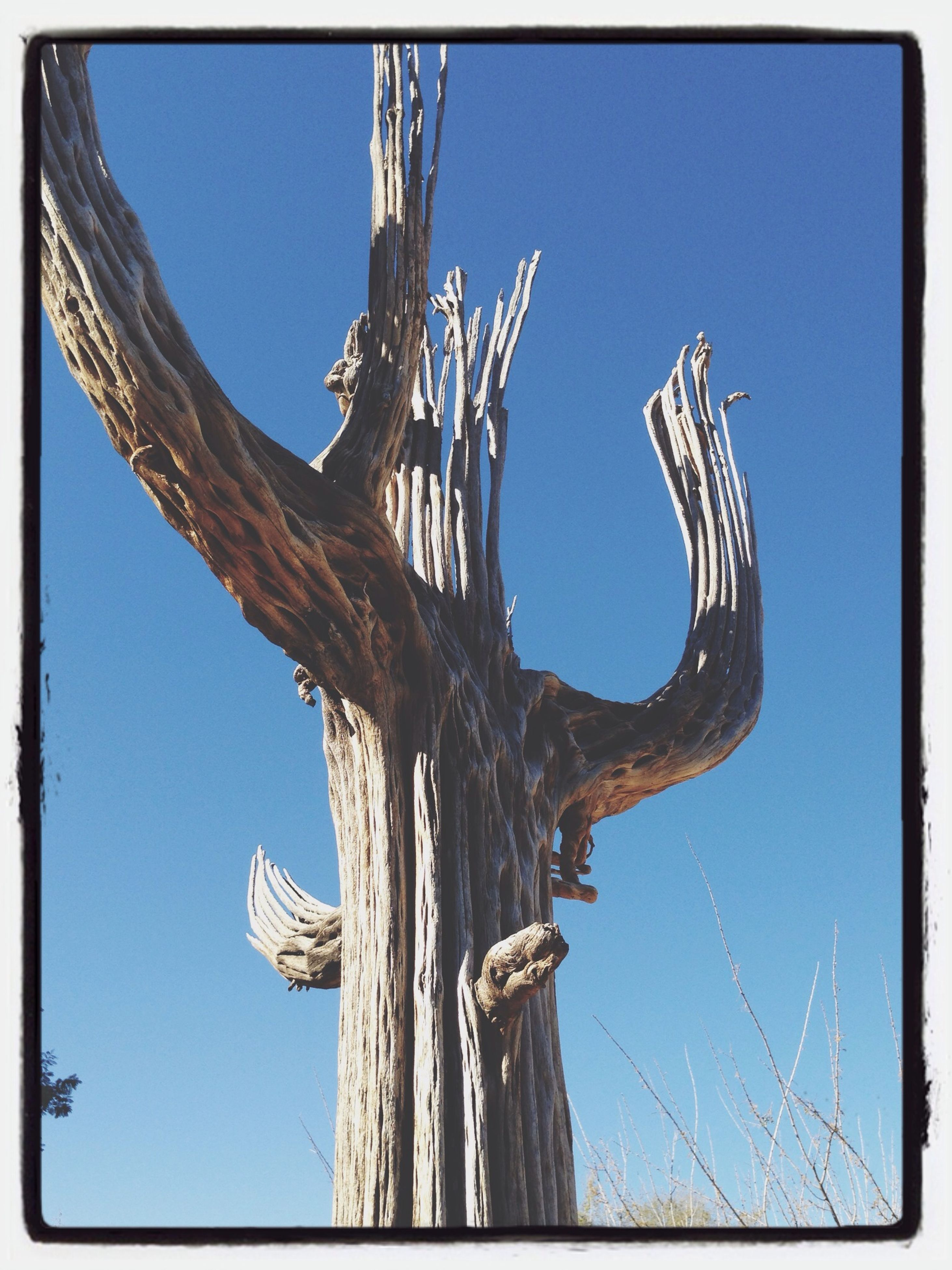 low angle view, blue, transfer print, clear sky, auto post production filter, sky, day, bare tree, outdoors, no people, tree, built structure, sunlight, branch, nature, close-up, old, art and craft, architecture, tree trunk
