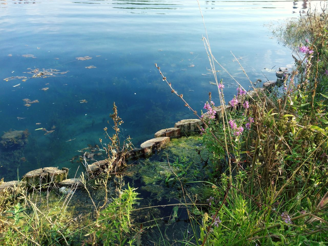 Beautiful stock photos of weed, Russia, Ufa, Water, beauty In Nature