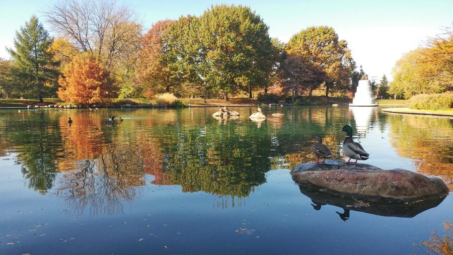 Reflection Water Tree Nature Sky Outdoors Day Beauty In Nature Columbus, Ohio Short North Goodale Park Leaves Geese Beautifully Organized