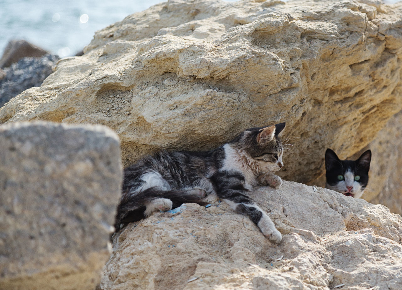 Street Cats Animal Themes Animals In The Wild Boulder Cats Coastline Day Feline Feline Portraits Mammal Mersin Turkey Nature No People Outdoors Rock Formation Street Cats