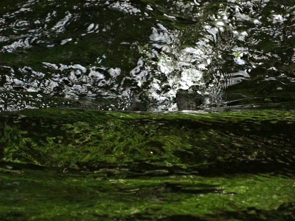Rapids Water River Swirl Reflections And Shadows Water Surface Waterrefections Enjoying Life Morbihan Relaxing Walking Around Taking Photos From My Point Of View Check This Out Light And Shadows Ploerdut France Country Naturephotography