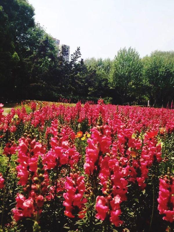 Flowers Nature Spring Park Publicpark Sunny Springtime Shanghai China