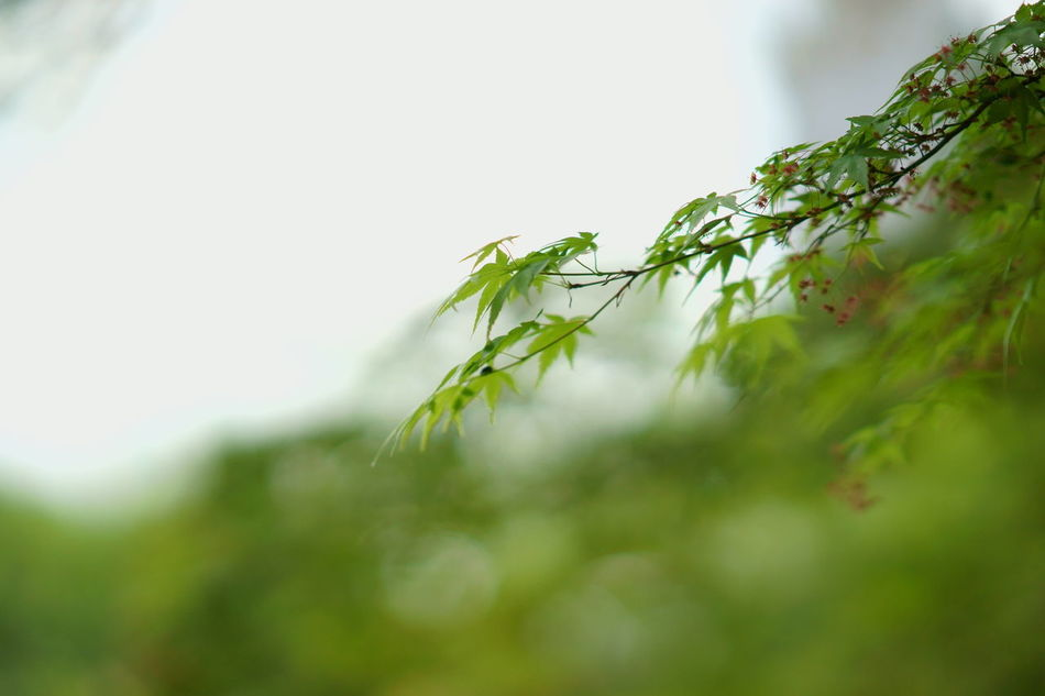 Beauty In Nature Close-up Day Food Freshness Green Color Growth Nature No People Outdoors Plant Selective Focus Tree