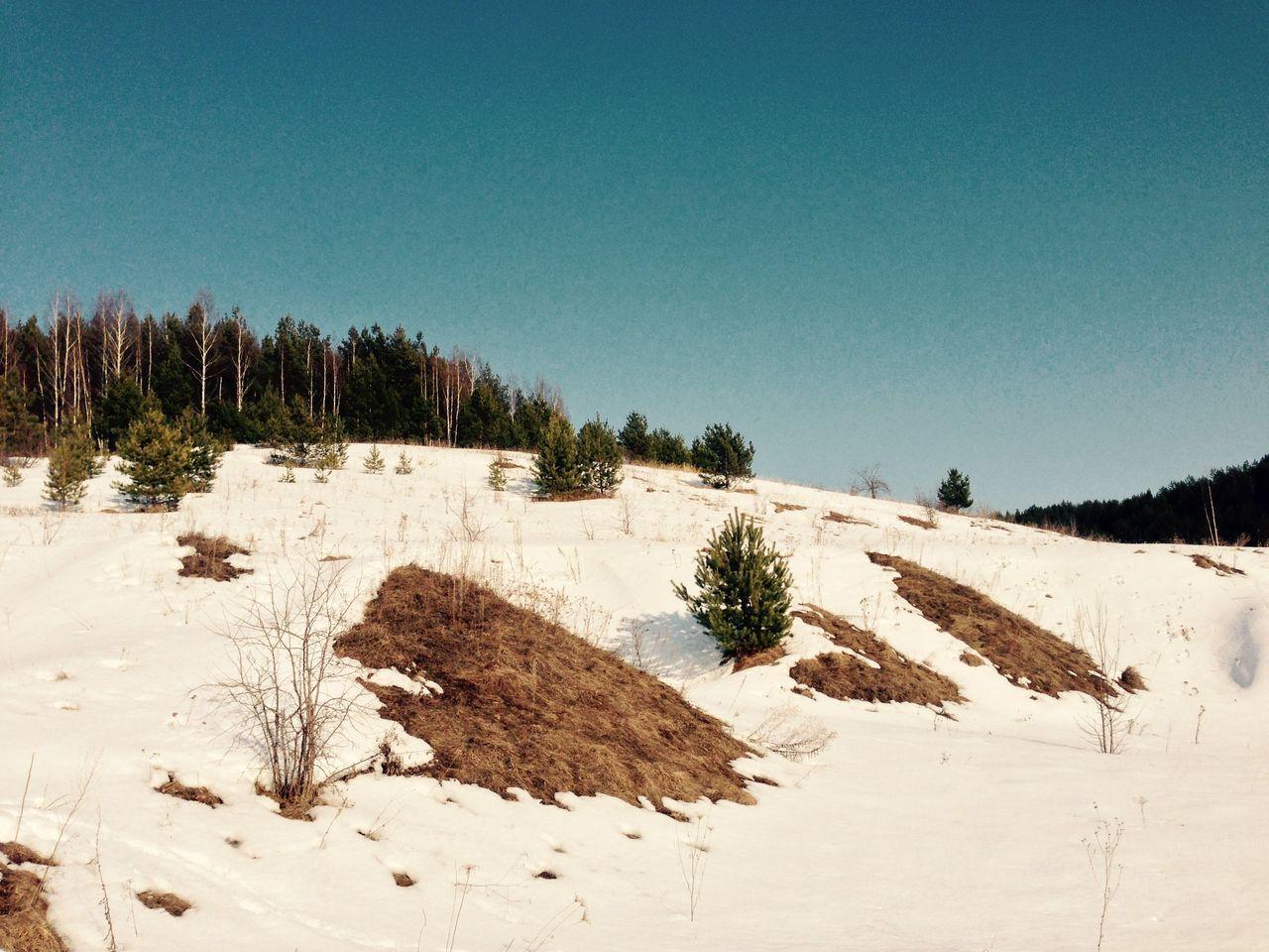 Лес Forest начало весны тепло