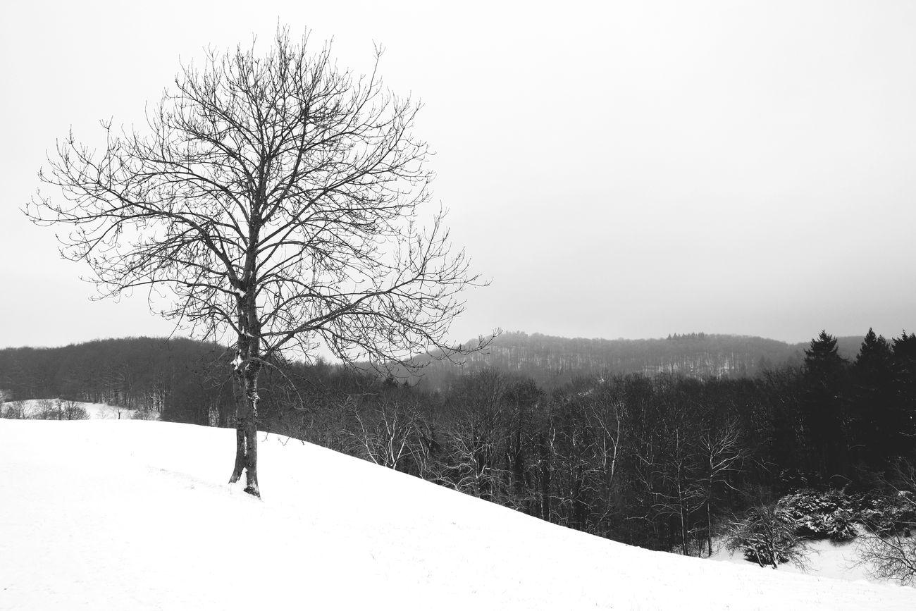winterwonderland... Photography Deutschland Winter Wonderland Blackandwhite Icecold EyeEm 5.0 New Filters bw3