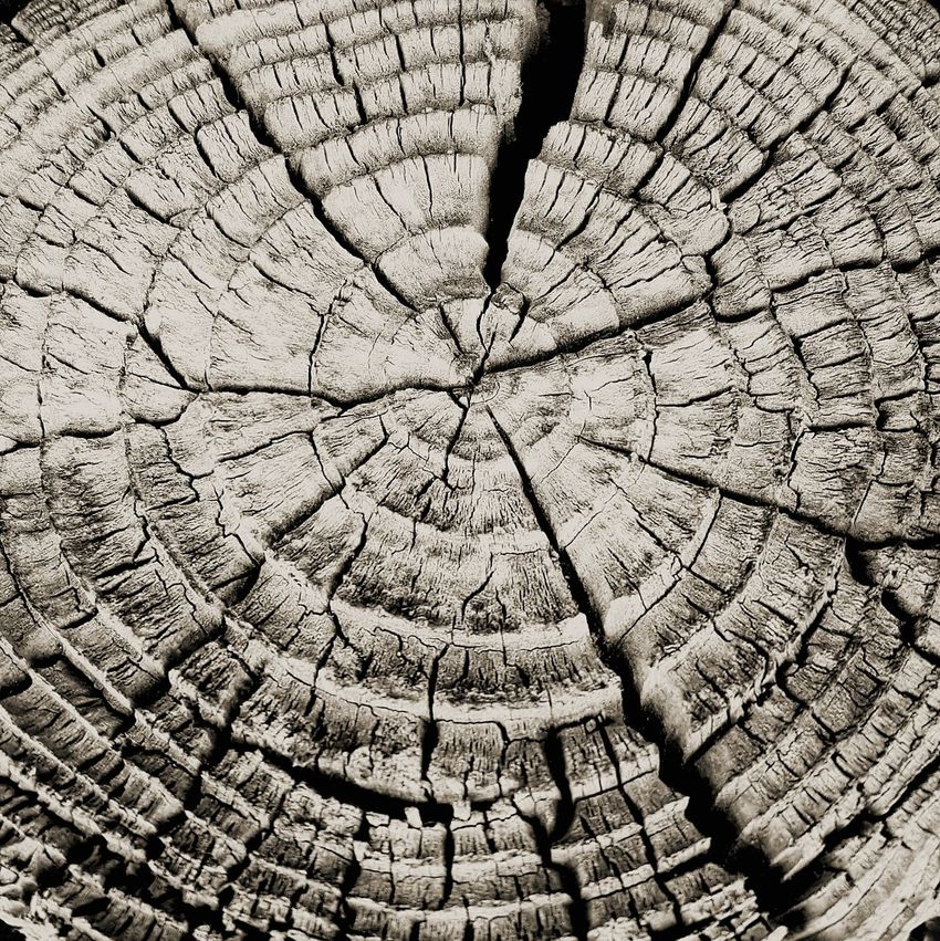 Tree Ring Cracked Tree Stump Textured  Black And White Photography Beauty In Nature Black & White Photography Black & White Black And White EyeEmNewHere GalaxyS7Edge Tree Trunk Monoart Premium Collection Eyeem Premium EyeEm Premium Collection