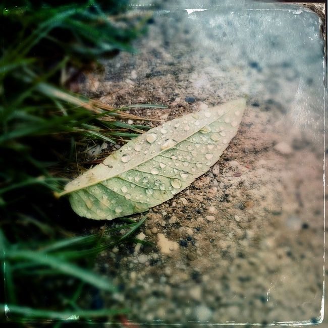 Found on a chilly and wet Saturday morning. Updated my iPhone to iOS 9 and discovered many long unused apps: namely #TinType, for example. Check This Out Taking Photos EyeEm Best Shots EyeEm Nature Lover Leaf Tintype Green Nature
