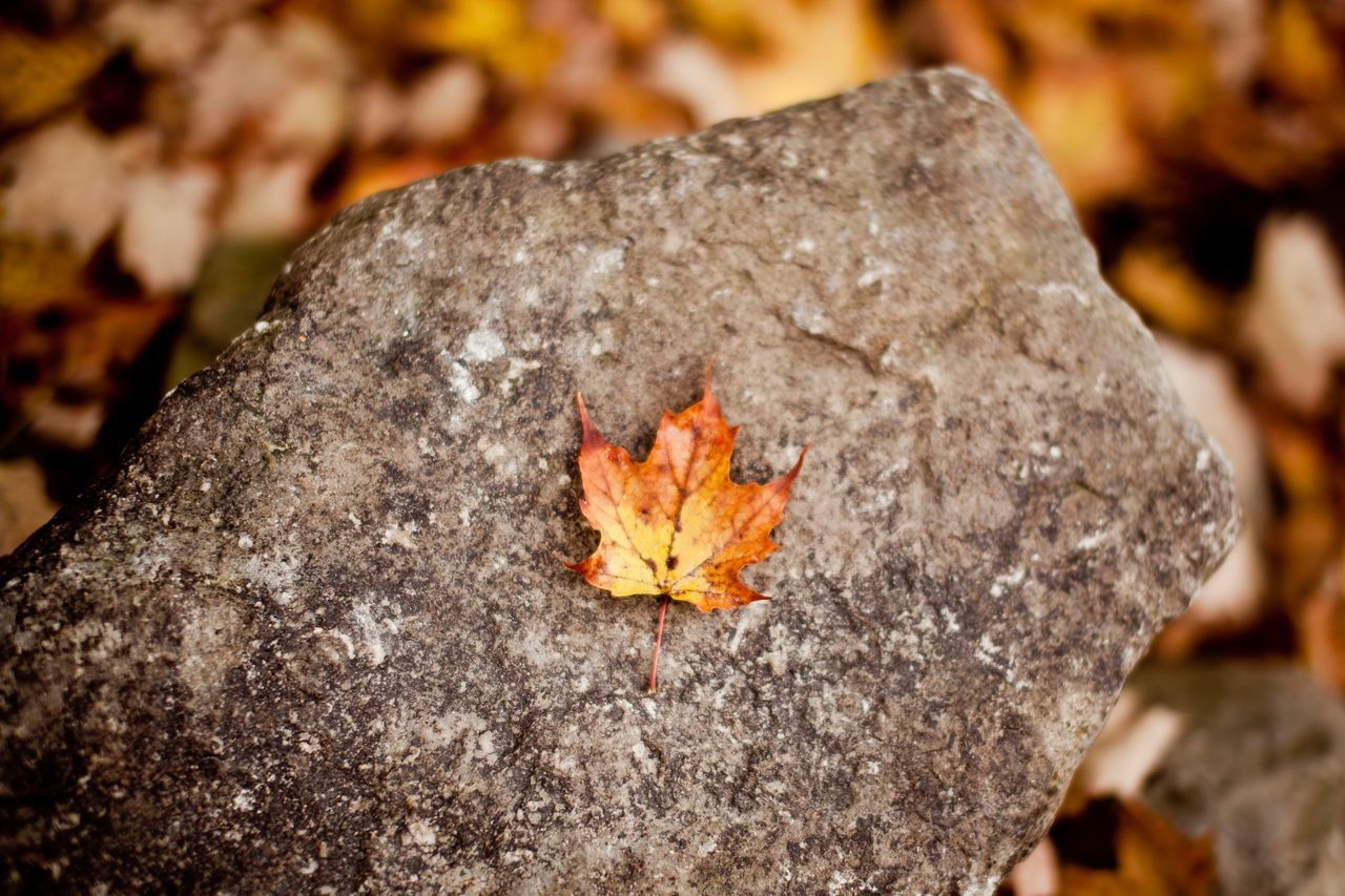 Beautiful stock photos of leaf, Autumn, Change, Close-Up, Day