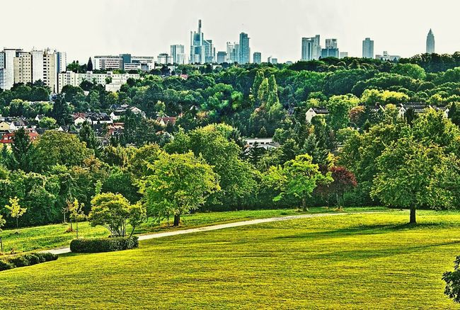 Skyline Frankfurt View From A Hill Park - Man Made Space Architecture City Building Exterior Built Structure Tree Grass Green Color Growth Cityscape Tranquility Tall - High Urban Skyline City Life Tranquil Scene Nature Skyscraper Lohrberg, Frankfurt Am Main, Germany🇩🇪