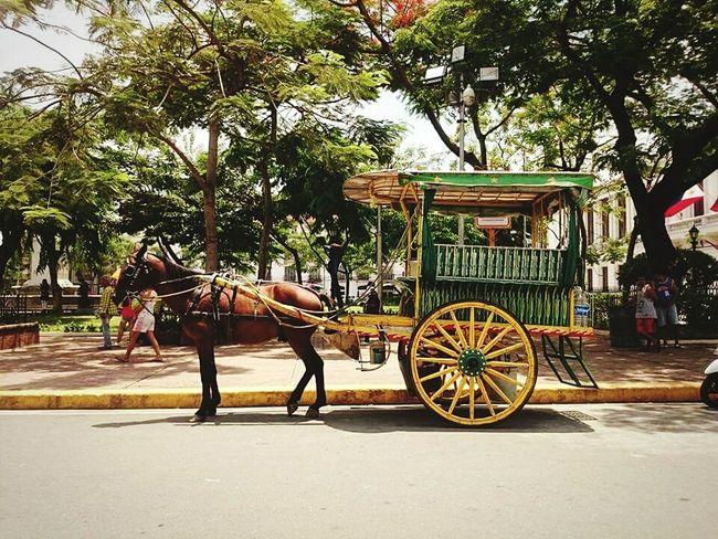 Fancy a ride? 🐴 Horse-drawn Carriage Kalesa Intramuros, Manila Manila, Philippines Eyeem Philippines EyeEm Manila Feel The Journey Showcase June On The Way Hidden Gems  Eyeemphoto