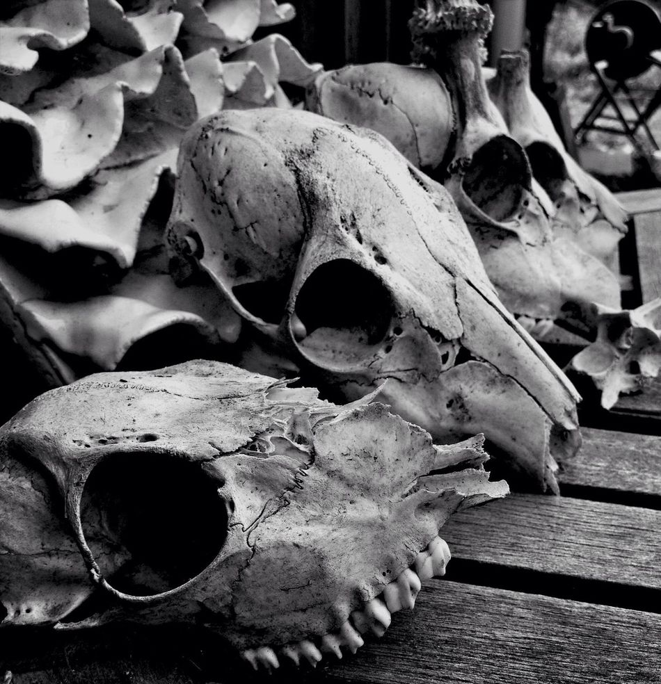 Beautiful stock photos of skull, Close-Up, Day, Death, Group Of Objects