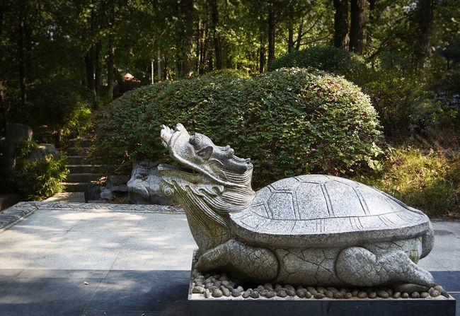 The tortoise is symbolizes longevity in China. Art Asian Garden Day No People Outdoors Park Park - Man Made Space Sculpture Statue Stone Material Stone, Ancient, Tortoise Tranquil Scene Tranquility Travel Destinations Tree Turtle